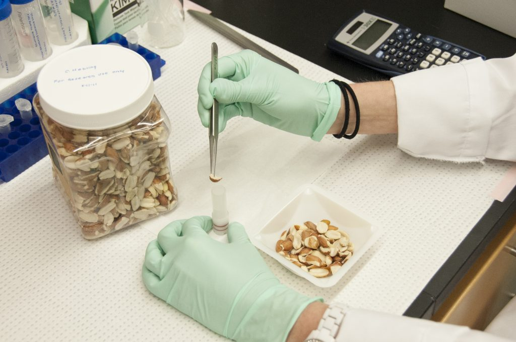 Lab technician taking a sample of almonds to test.